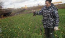 Мышевидные грызуны: обзор распространения в хозяйствах Тамбовской области в 2016-2017 годах, меры борьбы и прогноз развития на весну 2018 года