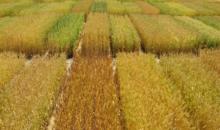 Информация о семеноводческих хозяйствах